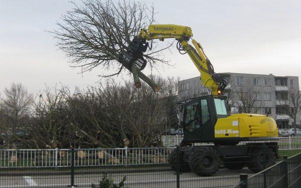 Verwijderen bomen Reina Geerligsdreef