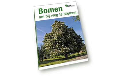 Bomen om bij weg te dromen