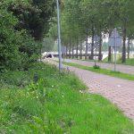 Maaibeleid en de verkeersveiligheid